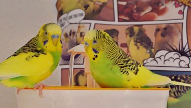 Photo of Parakeet bath, and why you should get it