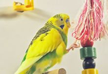 Photo of The 10 Best Budgie Toys you can buy from Amazon