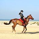 Prepare o seu cavalo para os treinos e próximas provas de Endurance  Os suplemen...