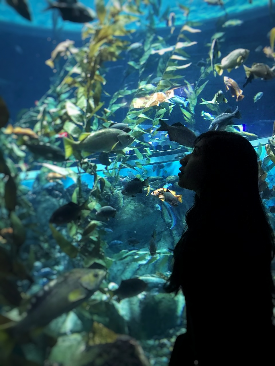 Ripley´s Aquarium of Canada Toronto