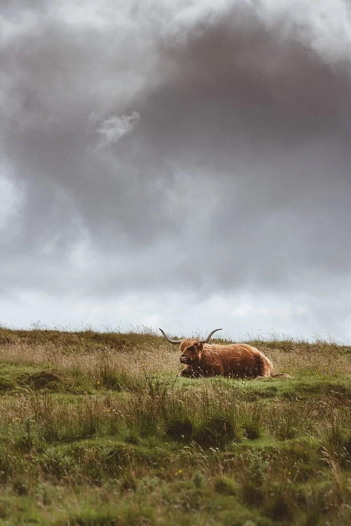 Scozia - Il primo incontro sull'isola di Skye
