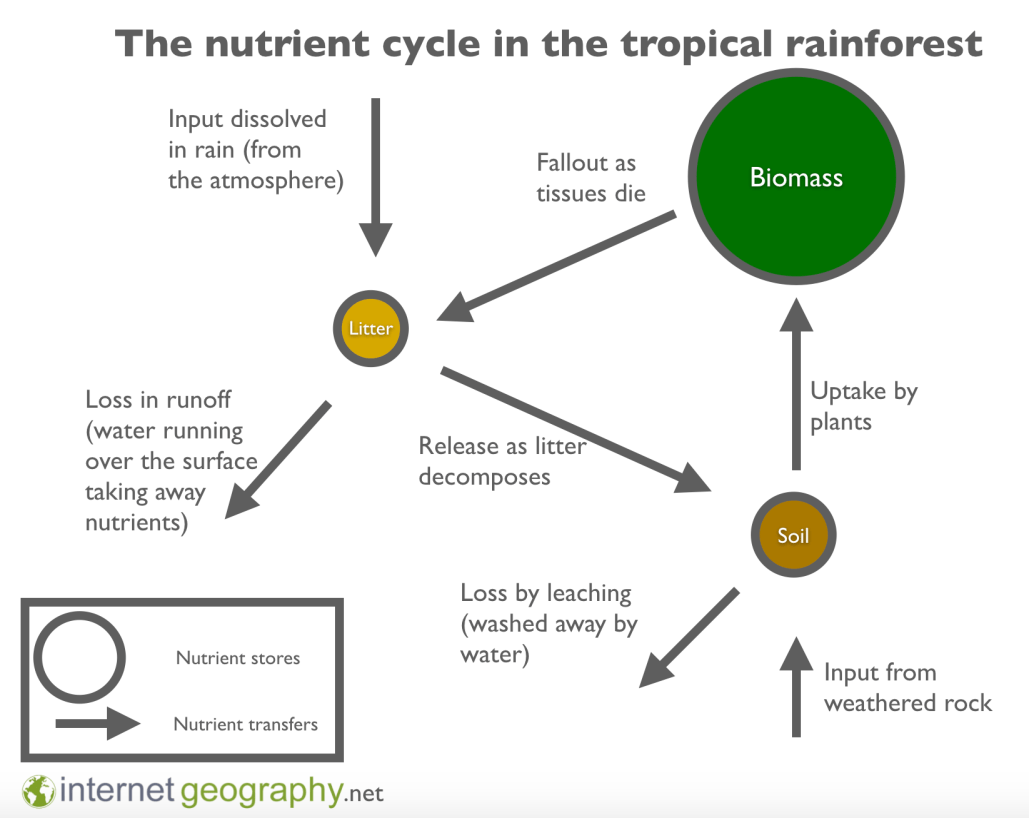 Nutrient cycle in the tropical rainforest