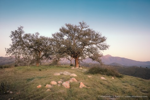 Dreaming Oaks -- Cleveland National Forest, near Santa Ysabel, California, USA