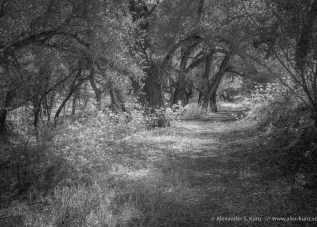 Oak-shaded trail at Boden Canyon, near Ramona, San Diego County, CA. March 2013.