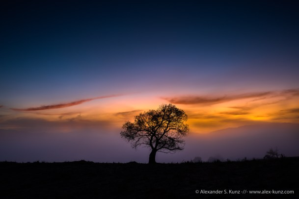 Cottonwood tree silhouette at dawn, Lake Henshaw, San Diego County, CA.