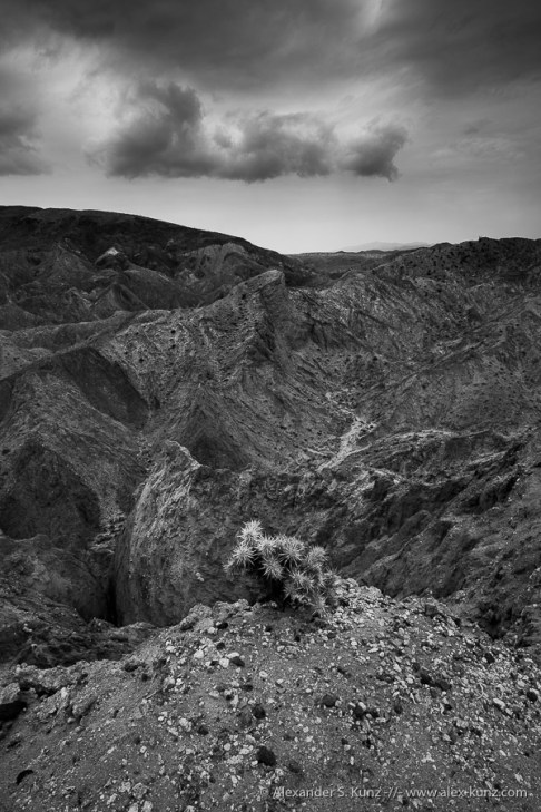 Canyon Sin Nombre, Ocotillo, California, United States