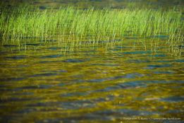 Grass & Water -- Dry Lake, San Gorgonio Wilderness, San Bernadino National Forest, California, USA