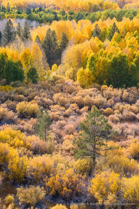 Aspens & Pines II -- Conway Summit, Bridgeport, California, United States