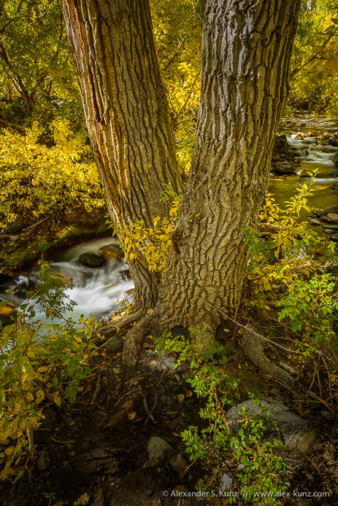 McGee Creek 4 -- McGee Creek, Mono County, California, United States