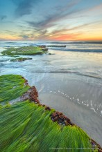 Tabletops & Surfgrass -- Seaside Beach, Cardiff By The Sea, California, United States