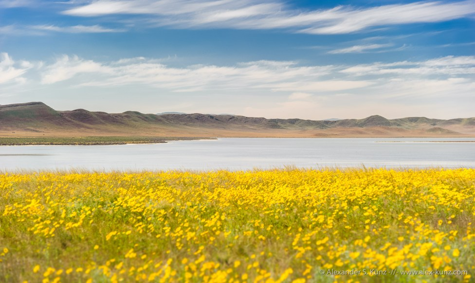 Goldfields and Soda Lake -- Carrizo Plain, San Luis Obispo County, California, USA