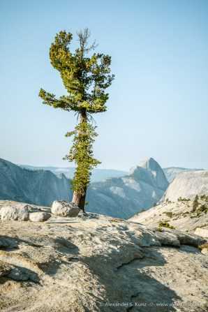 Pine and Half Dome 2 -- Olmsted Point, Yosemite NP, California, United States