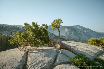Pines, Juniper and Clouds Rest -- Olmsted Point, Yosemite NP, California, United States