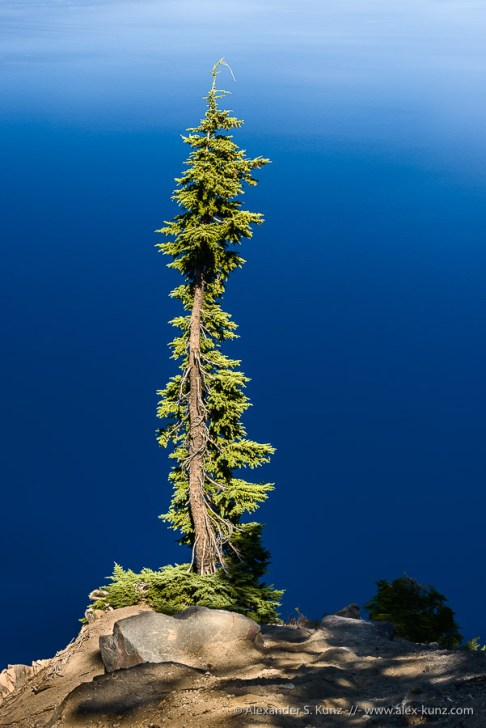 Pine on Blue -- Discovery Point, Crater Lake National Park, Oregon, United States