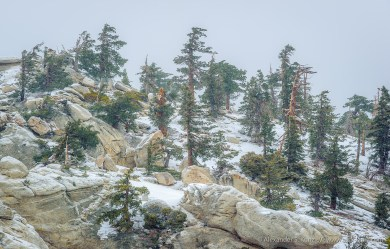 Sugar Pines and Boulders -- Pacific Crest Trail, San Jacinto , California, USA