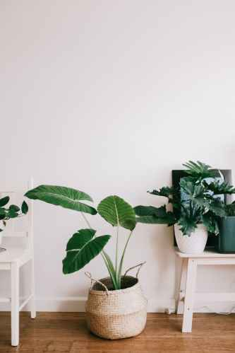 Sustainable living green plant on white wooden table