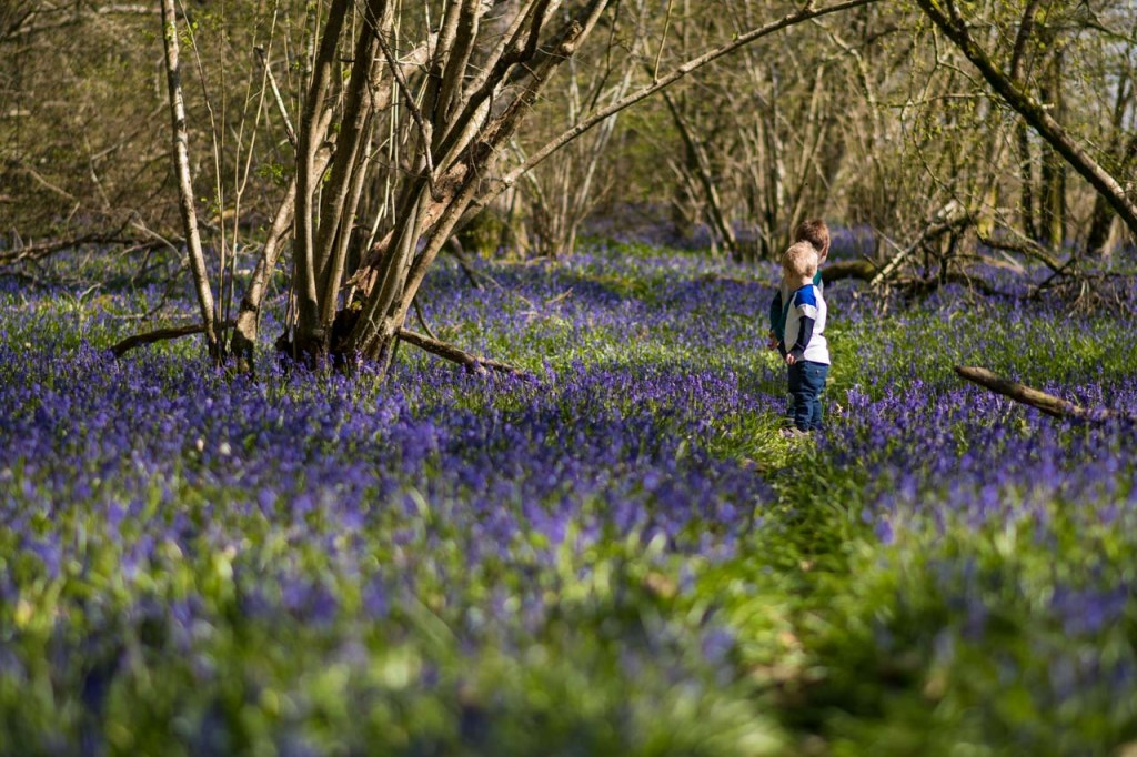 two boys playing in a bluebell wood