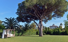 Vus sur le Chateau Borelli