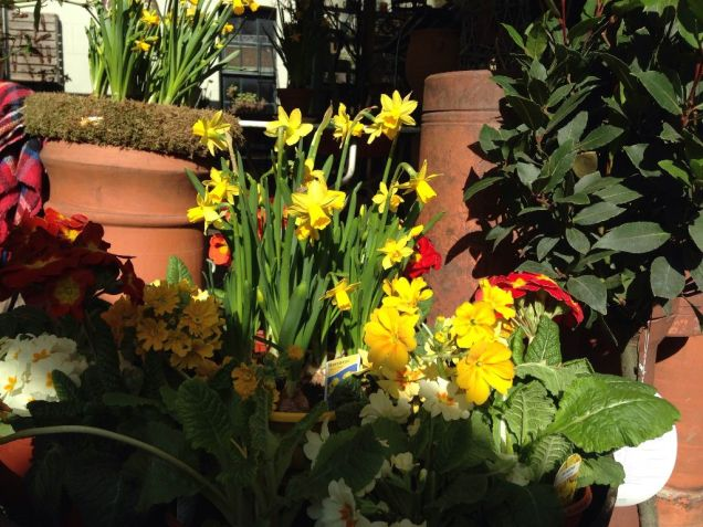 daffs and terracotta