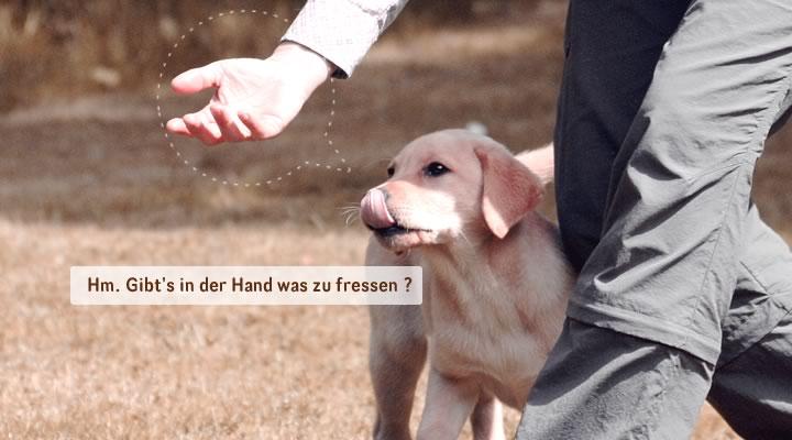 Hundeschule Altmuhltal Hundeschule Altmuhltal