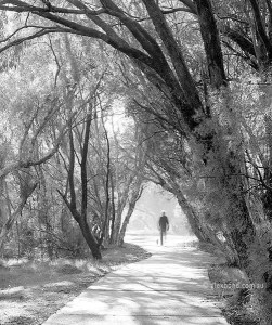 Man walking dog Canning River Regional Park Australia