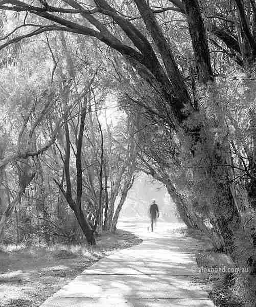 Man walking dog Canning River Regional Park Australia