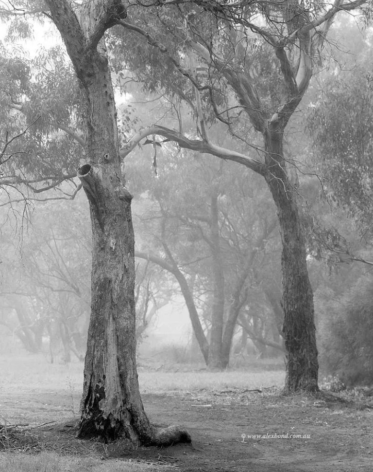 canning river woodlands mist