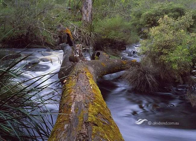 Warren River at Moons Crossing, Pemberton region, Warren National Park, Western Australia