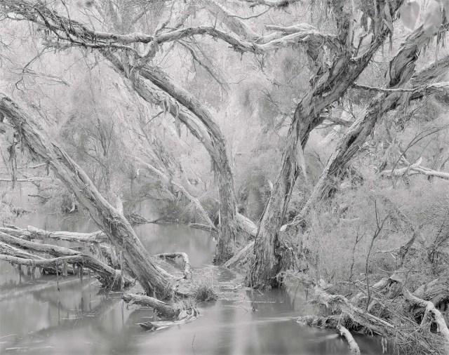 Paperbarks Bannister Creek 40x50cm Print Framed Aluminium 74.5cm x 61.5cm 2 of ed10