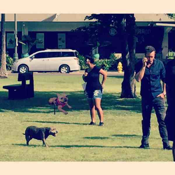 Alex O'loughlin with dusty on set