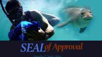 Hawaii Five 0 Fan Fiction -SEAL of Approval-Part 2