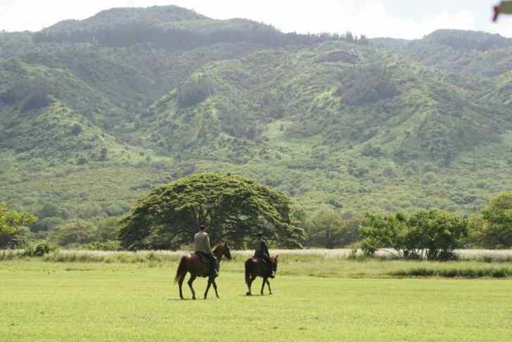 Hawaii Five 0 episode 9.10
