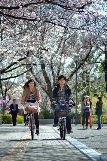 A couple cycling through blossom, Tokyo