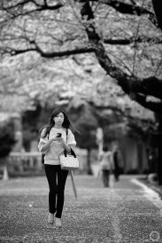 Blossoms in monochrome, Yanaka