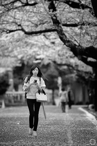 Blossoms in monochrome, Yanaka