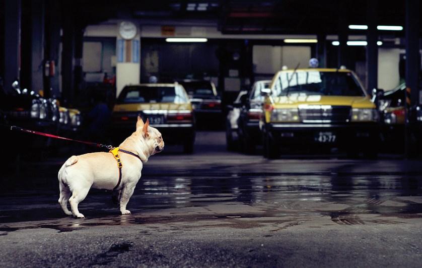 Garage guard-dog, Omori
