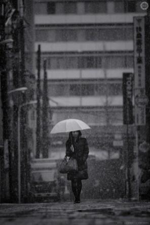 tokyo-snow2012_ALF2732