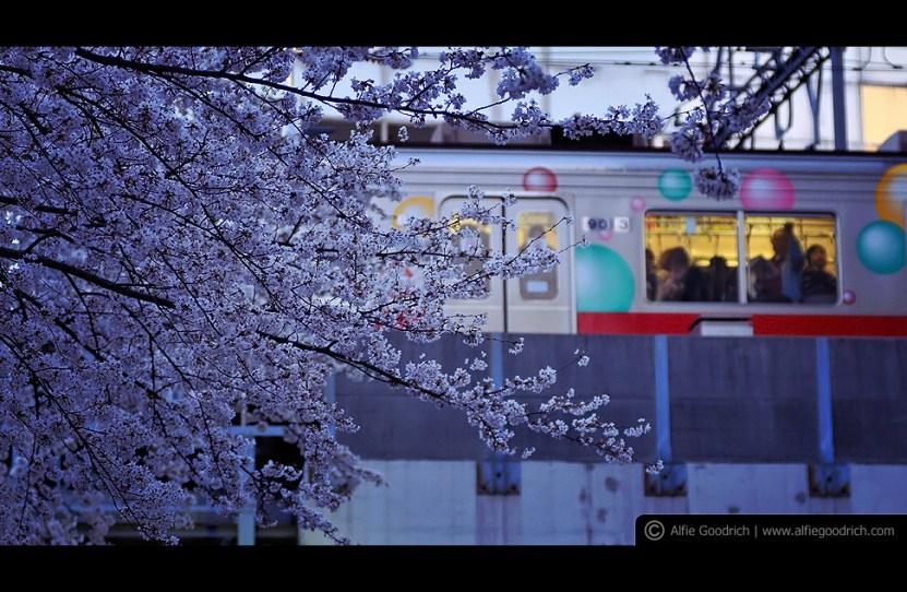 hanami08_nakameguro008