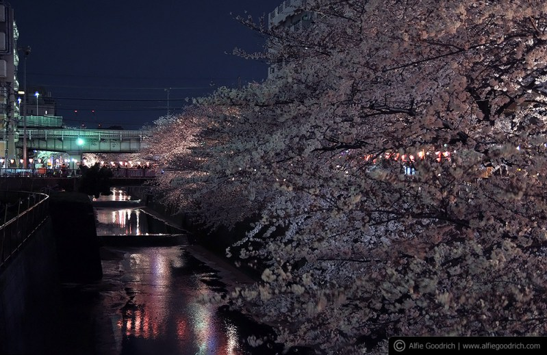 hanami08_nakameguro019