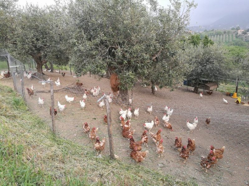 birrificio-dell-aspide-galline-birre