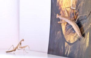 mantis-jordi-abello-08