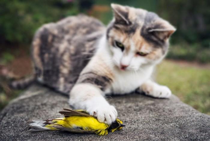 gato-caza-pajaro