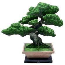 Bonsai pino bianco del Giappone