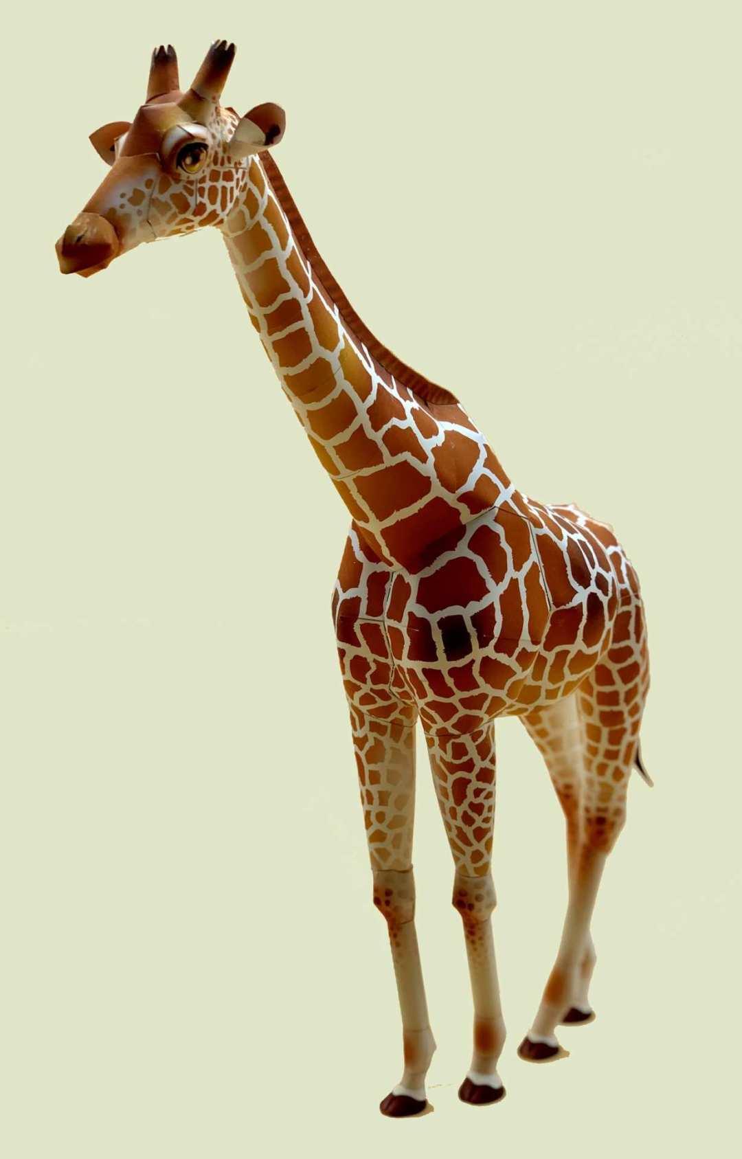 Animali –  Paper Sculptures