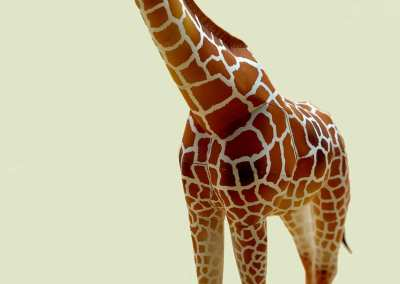 Animali –  Paper Sculptures