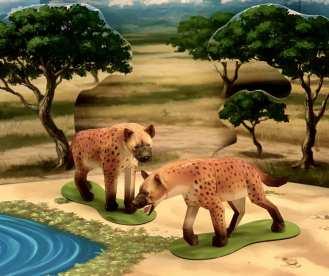Iene - Africa