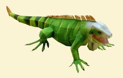Iguana - Americhe