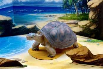 Tartaruga Galapagos - Americhe