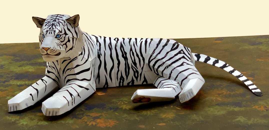 Tigre bianca - Asia