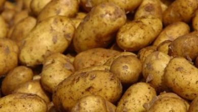 Photo of إتحاد الفلاحين يندد ويطالب وزارة التجارة بسحب كميات البطاطا الموردة
